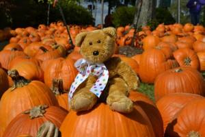 Bear on a pumpkin